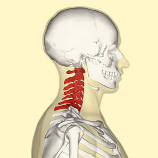 Pediatric C-Spine Clearance Artwork